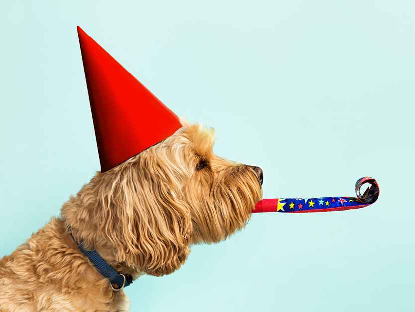 Partydog_400x300